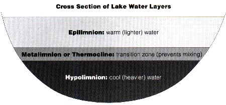 Cross-section of a stratified lake